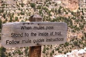 Hiking i Grand Canyon 1